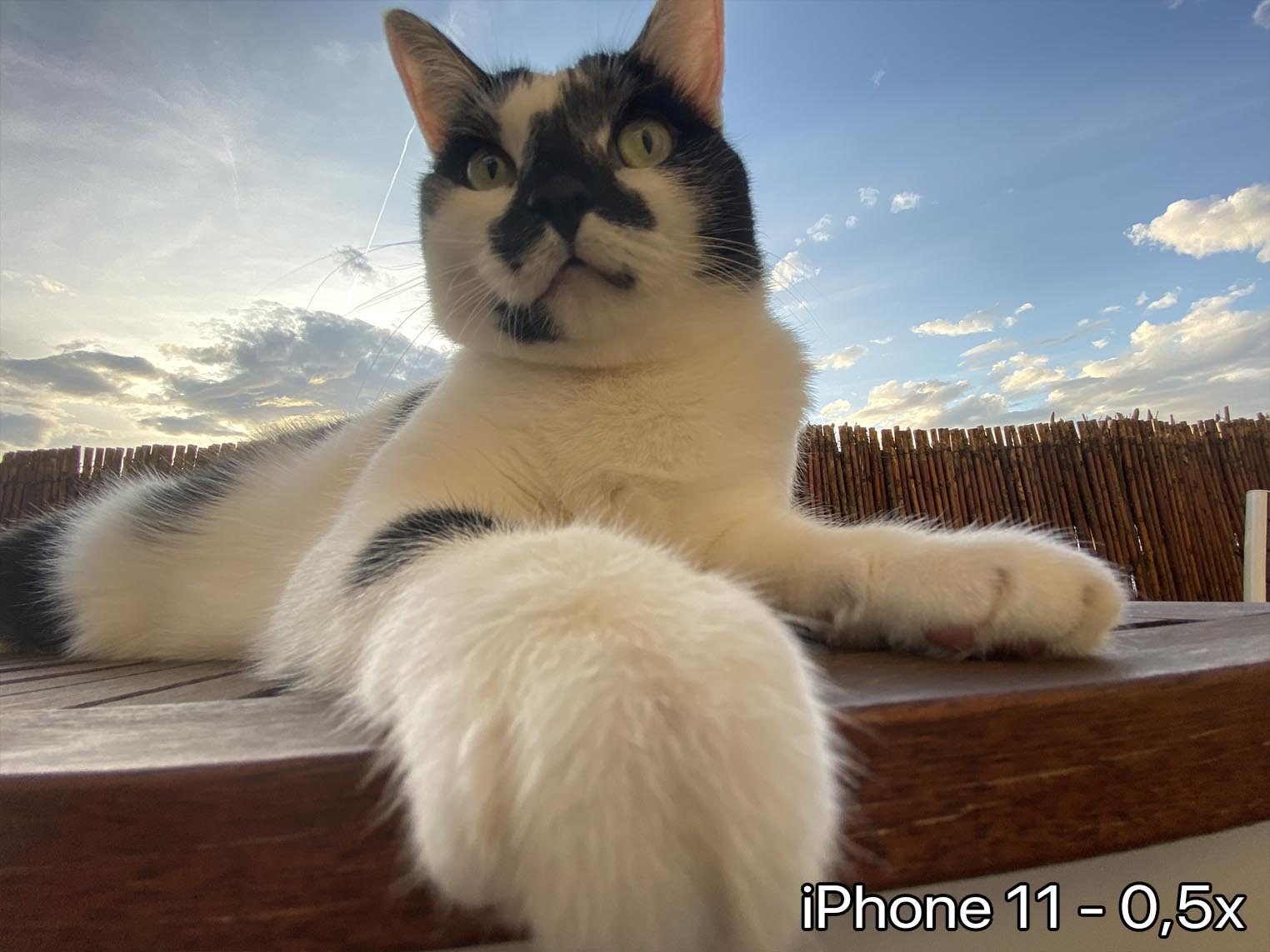 iPhone 11 ultra grand-angle déformation